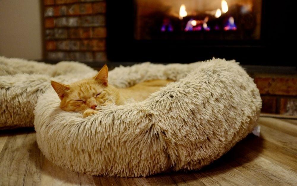 kattenmand-header