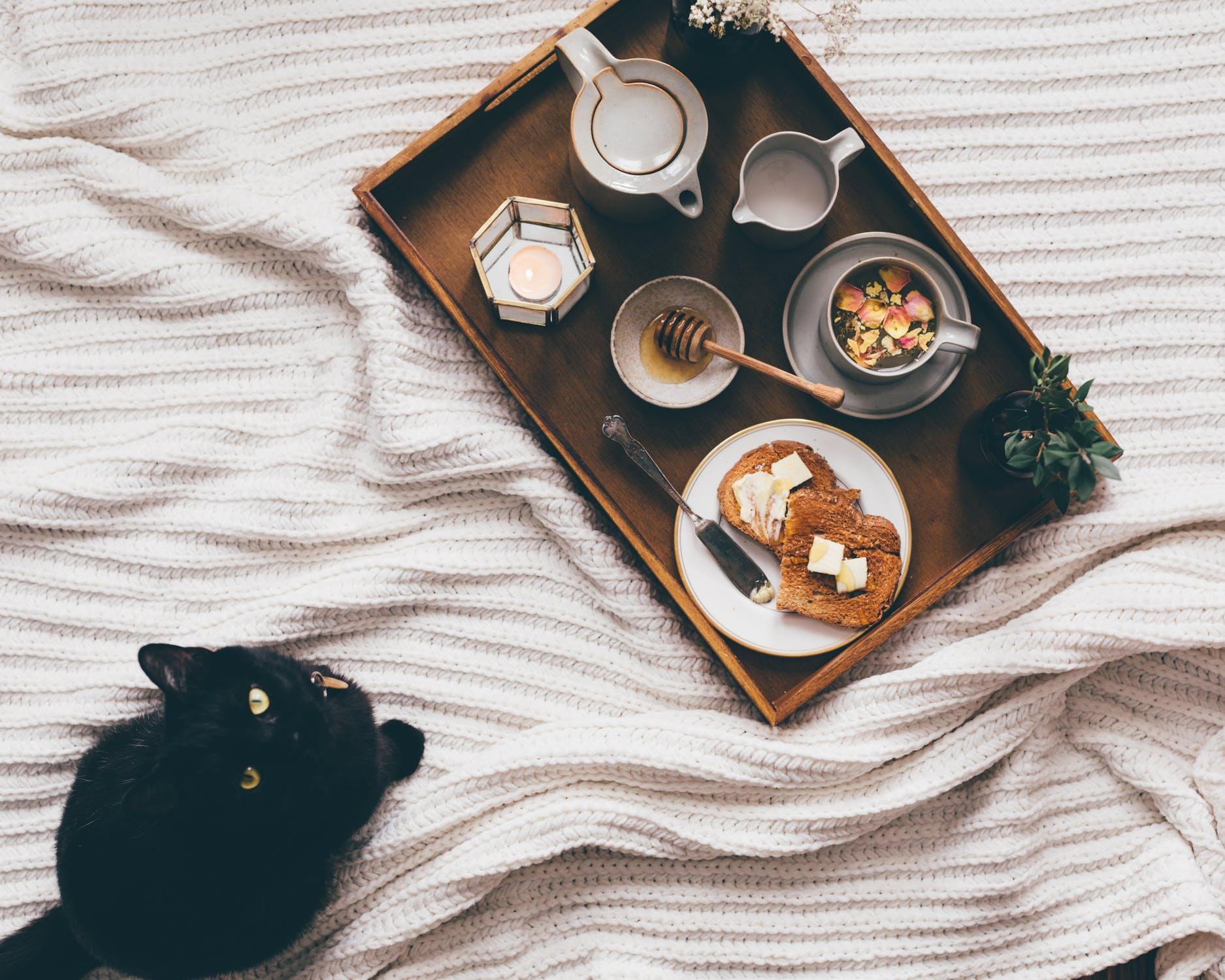 kattenvoer-artikel-header